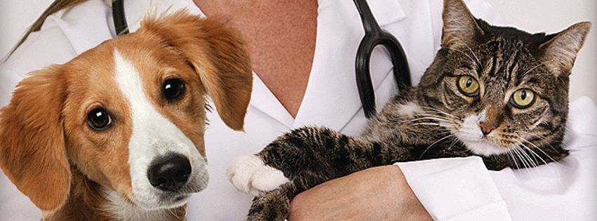 Veterinarian Job Description & Duties | Vethow