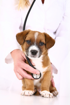 Learn about veterinary school requirements