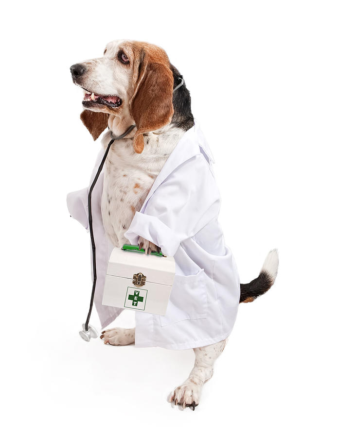 Veterinarian Job Experience: Useful Skills For Vets | Vethow